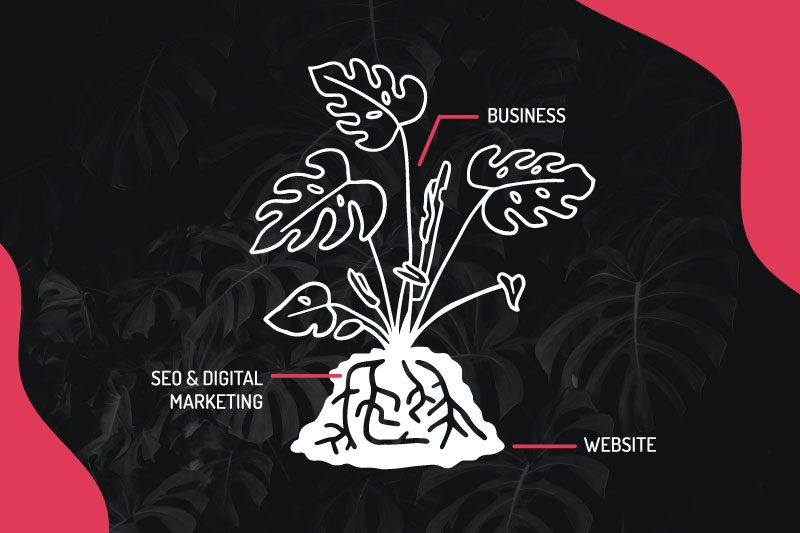 Do I need SEO? [If your business were a houseplant]